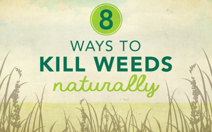 8 Ways to Kill Weeds Naturally